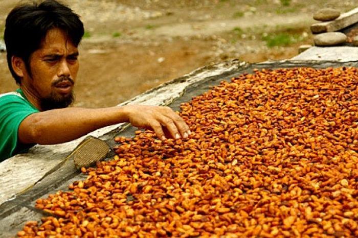 Wie wint (er bij) de wedloop naar cacao in Indonesië?