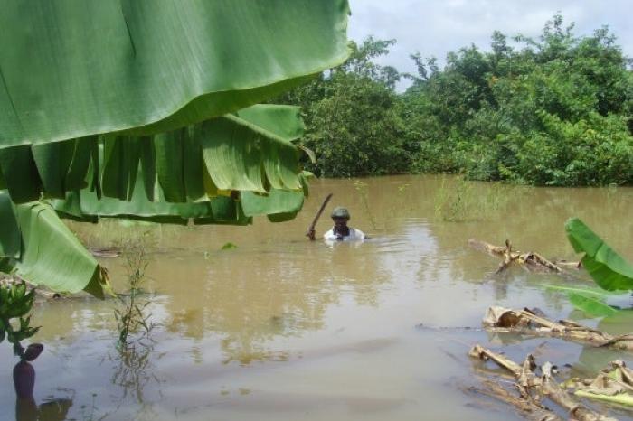 Bananenplantages in Senegal overstroomd