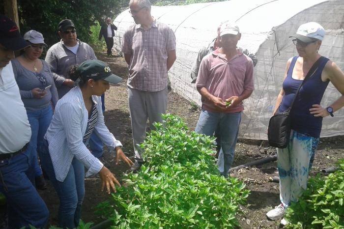 West-Vlaamse groenteboeren ontmoeten hun Nicaraguaanse collega's