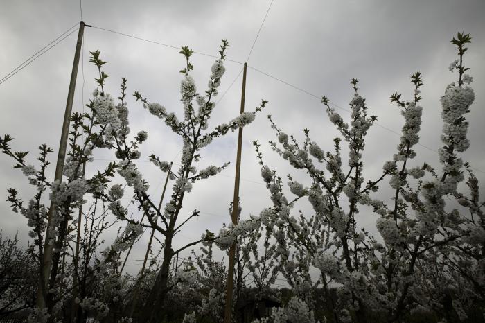 Vlaanderen tolereert geen proteststemmen tegen GGO's