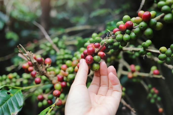 Hoe verklein je de milieu-impact van een kopje koffie?