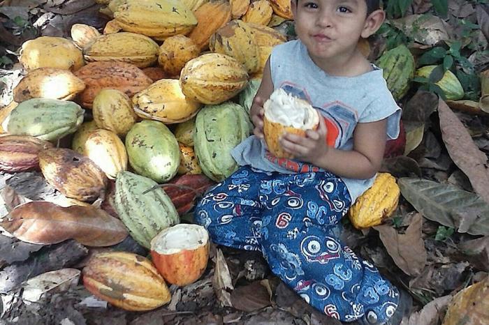 El cacao: parte de la solución…