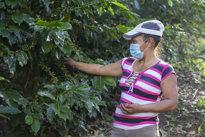Honduras: primer país con una política de género para su café
