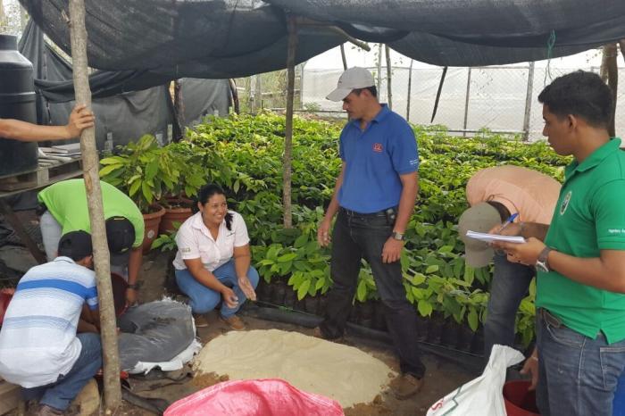 Evalúan uso de microorganismos para mejorar competitividad de cacaoteros