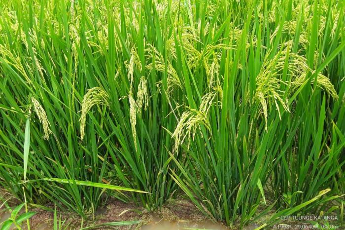 Les CEP au service de la dynamique paysanne