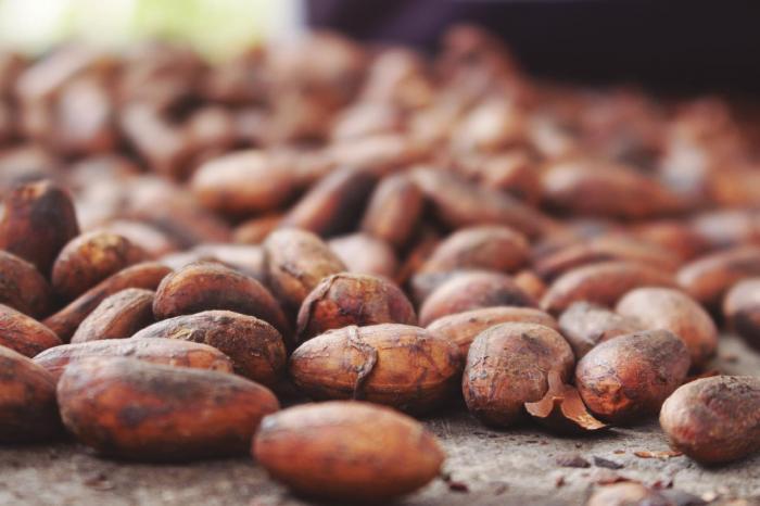 MOCCA: Ecuador lidera esfuerzos regionales para mitigar cadmio en el cacao