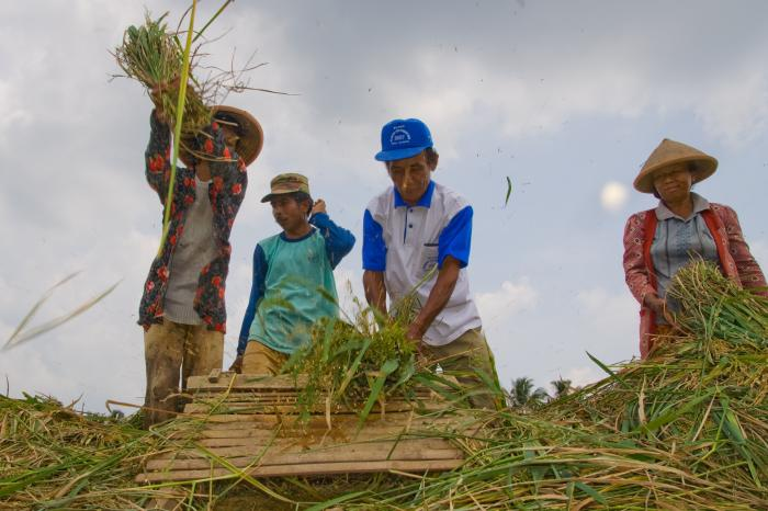 Boyolali organic rice. Success story in the Food Tank by numbers report