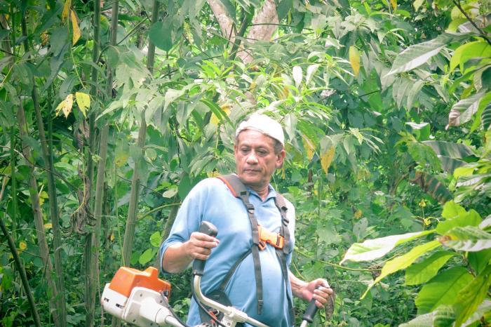 Entrevista con Wilfrido Sosa: un cacaotero socio de APROCA