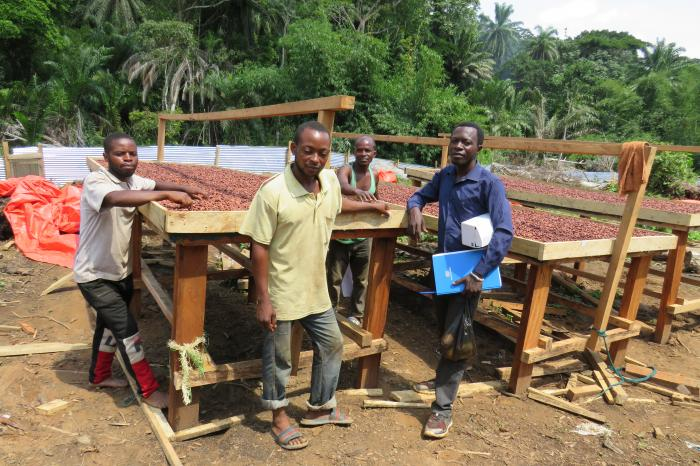 Congolese cocoa farmers add flavour to prime Belgian chocolate