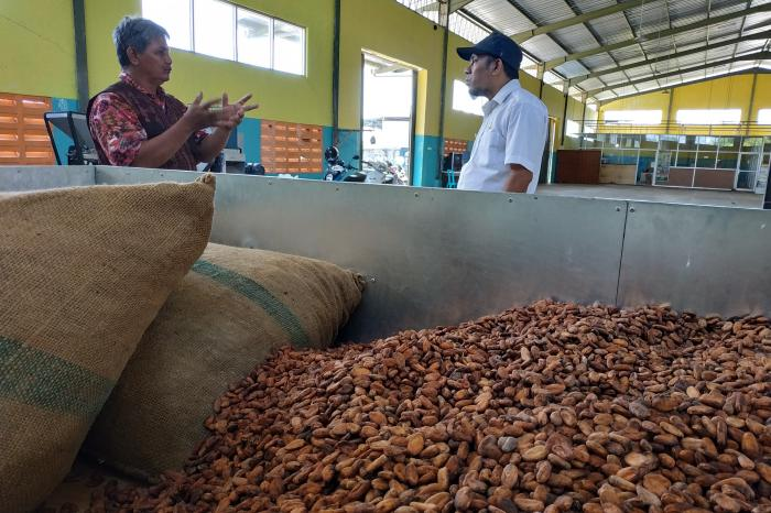 The importance of quality control in a fermented cocoa business