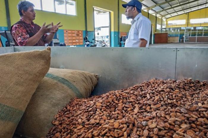 Sumber Inspirasi - Pentingnya quality control dalam bisnis biji kakao fermentasi