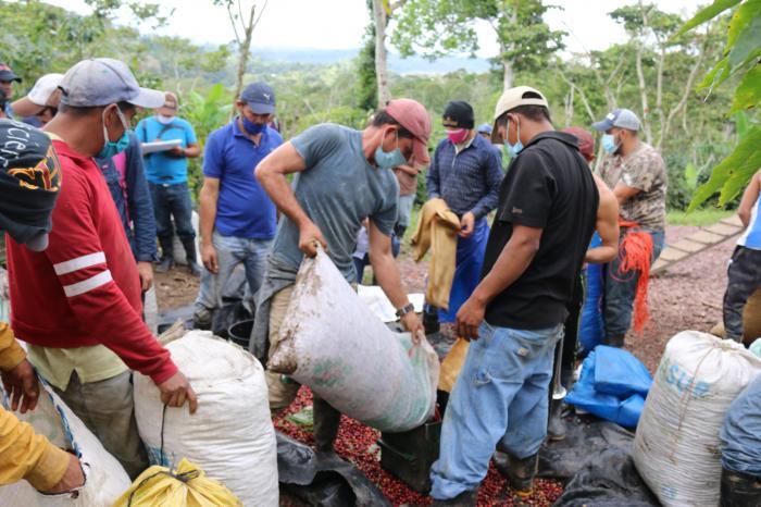 Covid 19: alianzas para salvar el café en Nicaragua