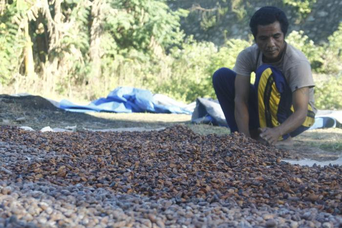Inside story from an Indonesian cocoa farmer organisation