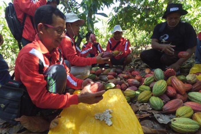 Sumber Inspirasi - Pembelajaran di Balik Penjualan Kakao Bersertifikasi