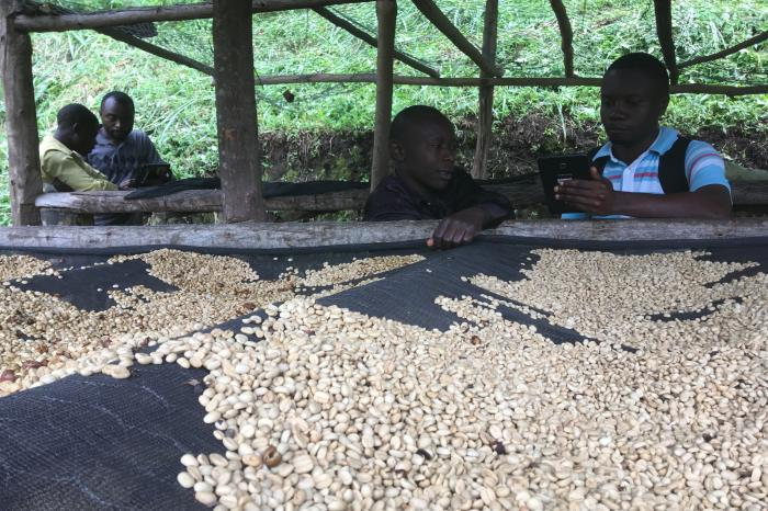 Inclusive Business Scan: members' perception on coffee cooperative Kawa Kanzururu