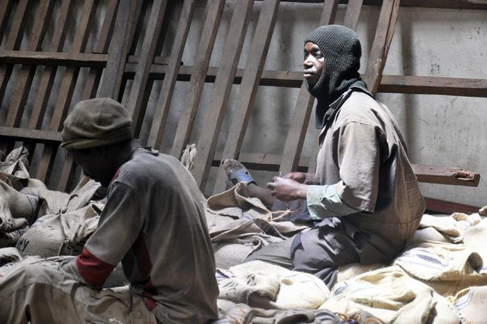 Le mal historique de la filière café au Nord-Kivu