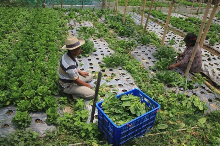 Membuktikan Kekuatan Petani Kecil
