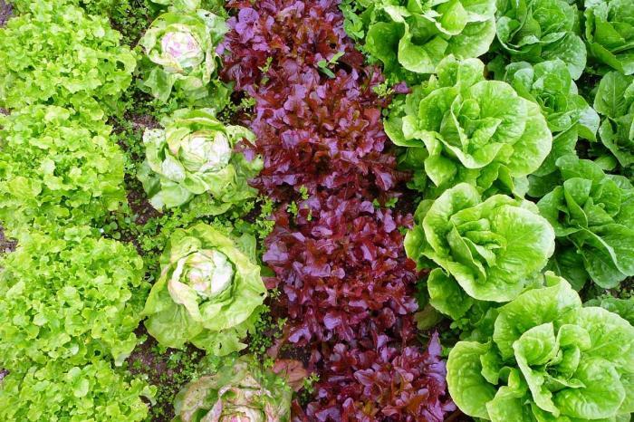 Middenveld vraagt meer steun voor Agro-Ecologische landbouw
