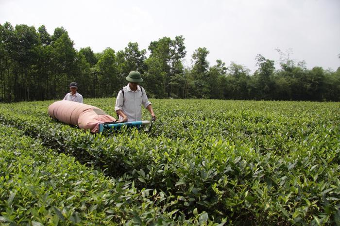 Boeren schenken klare thee in Vietnam