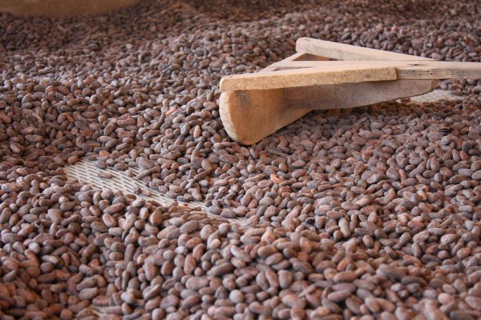 Chocolade, dat lusten ze niet in Nicaragua