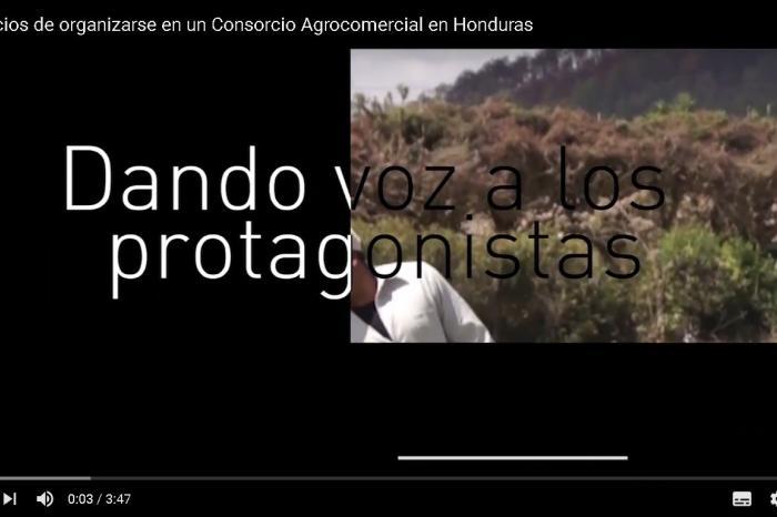 Video testimonial:  Beneficios de organizarse en un Consorcio Agrocomercial en Honduras.