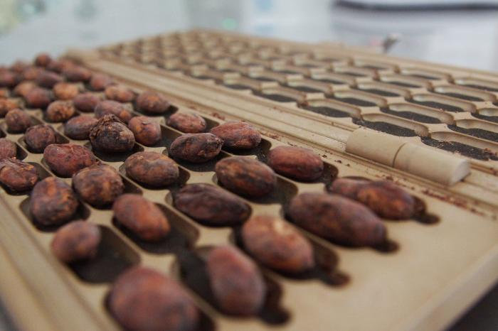 Centro y Sur América entre las 50 mejores muestras de cacao en París.