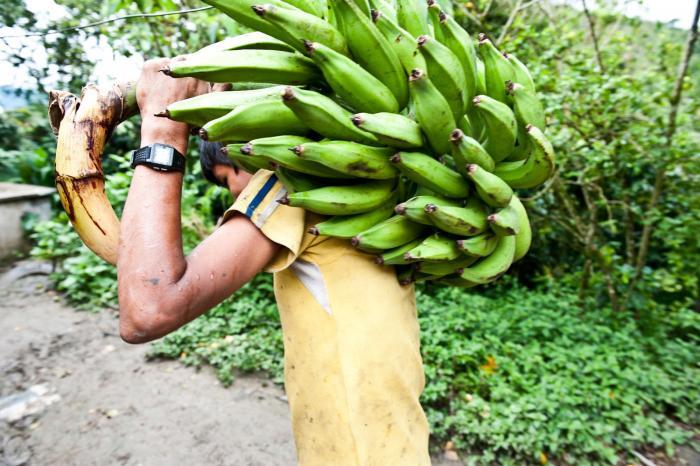 Het groene goud van Nicaragua
