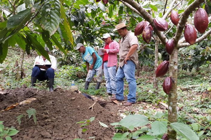 Cacao, un negocio inclusivo para los olanchanos