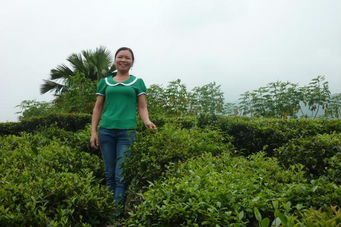 Case study: tea marketing in Phu Tho, Vietnam