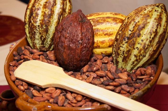Primer diplomado en mejoramiento del cacao en Guatemala