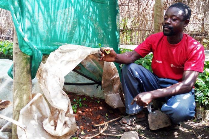 Renaissance des pépinières de café arabica à l'Est du Congo