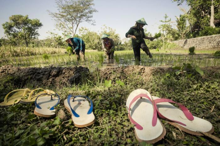 Pertanian Keluarga Memperbaiki Hidup Petani