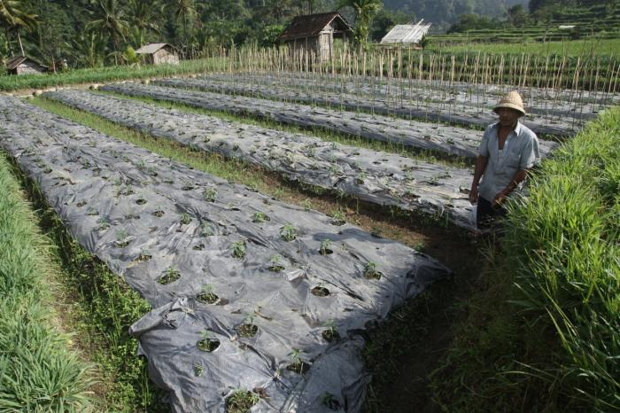 Petani Harus Berdaptasi terhadap Perubahan Iklim