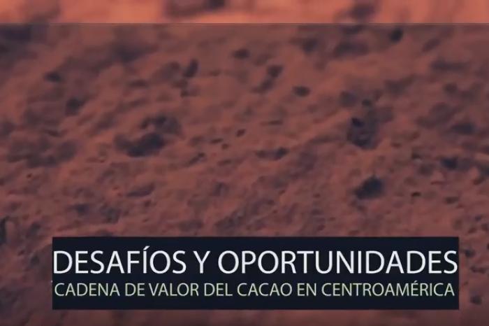 Vídeo: Situación de la Cadena de Valor del Cacao en Centroamérica