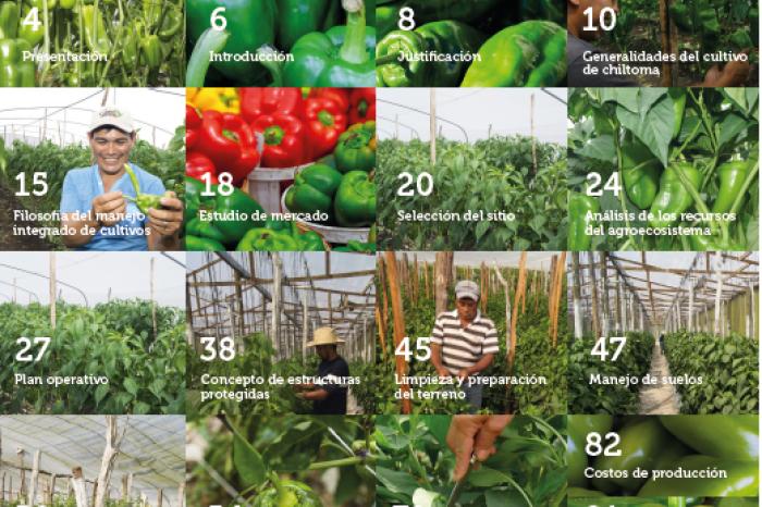 Guia: cultivando chiltoma Nathalie