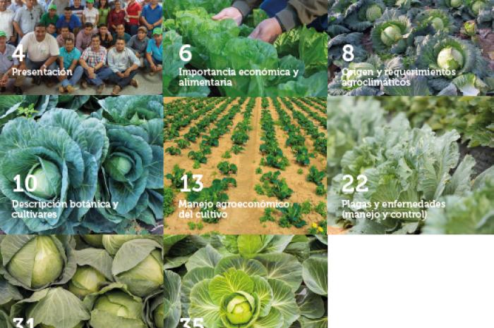 Guia: cultivando repollo con buenas prácticas agrícolas