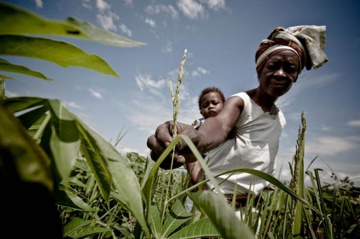 How can business make smallholder supply chains resilient?