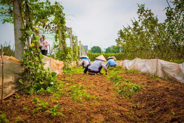 Trac Van, village of organic vegetable artists