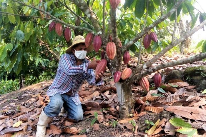 El secreto familiar tras el cacao fino y de aroma
