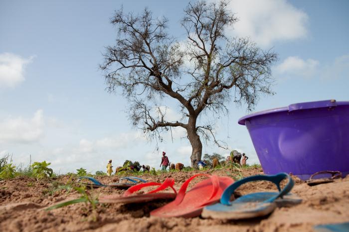 Expeditie Senegal op bezoek bij bananen- en sesamproducenten
