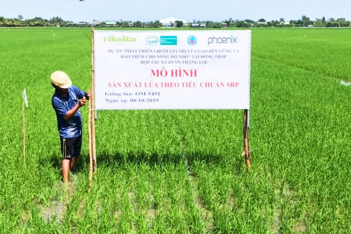 Rice production in Dong Thap: Towards sustainable agriculture