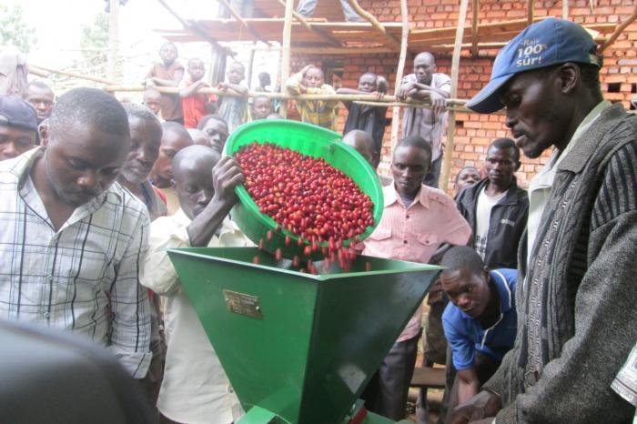 De revival van de Congolese koffie