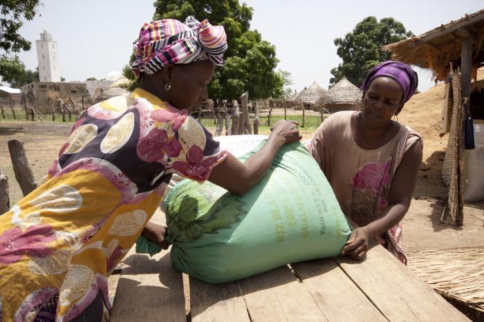 Rijstboeren in Senegal: 1 jaar later