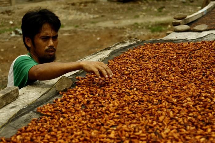 Case study: Increased incomes for Indonesian cocoa farmers in sustainable markets
