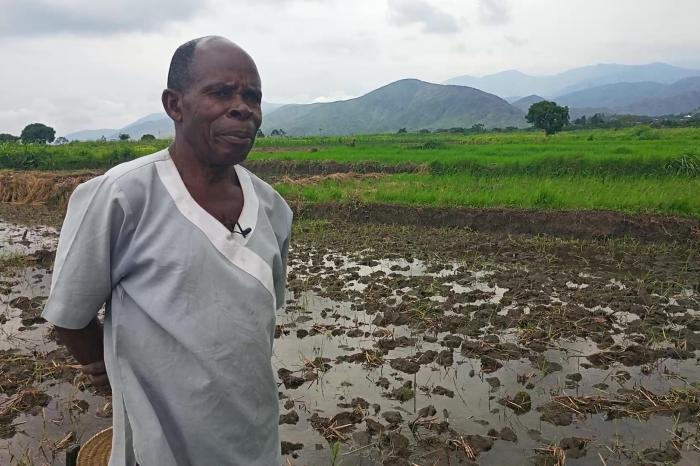 Rushendeka Kamanyula, le riziculteur-modèle à Kiliba