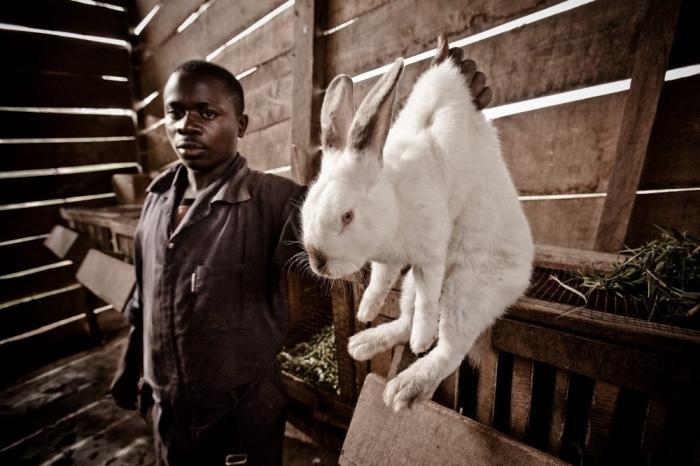 Partijvoorzitters ontvangen witte konijnen uit Congo