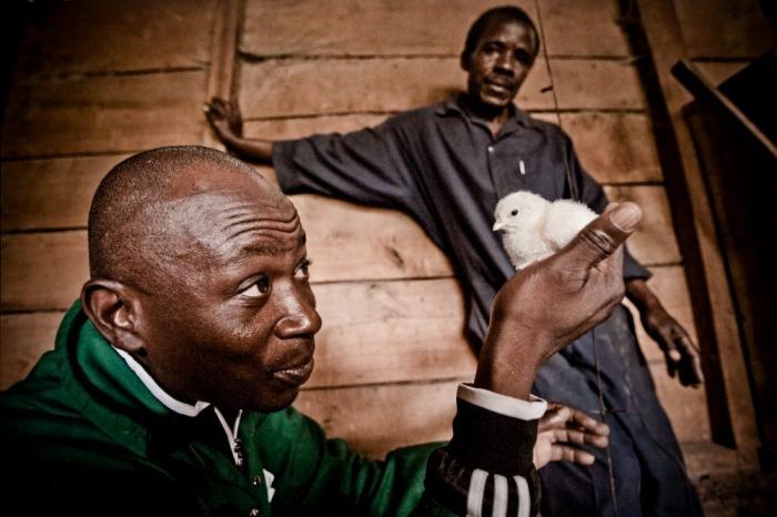 Justin Kasayi richt eerste kippenkwekerij op in Oost-Congo