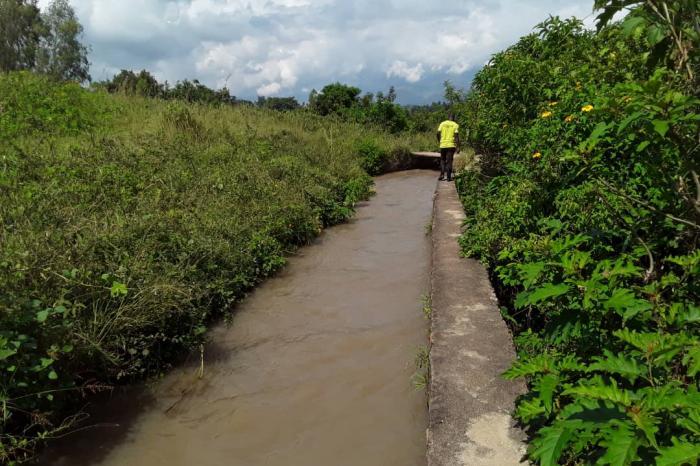 Canal de Kakamba, le goulot d'étranglement de la riziculture à Luvungi
