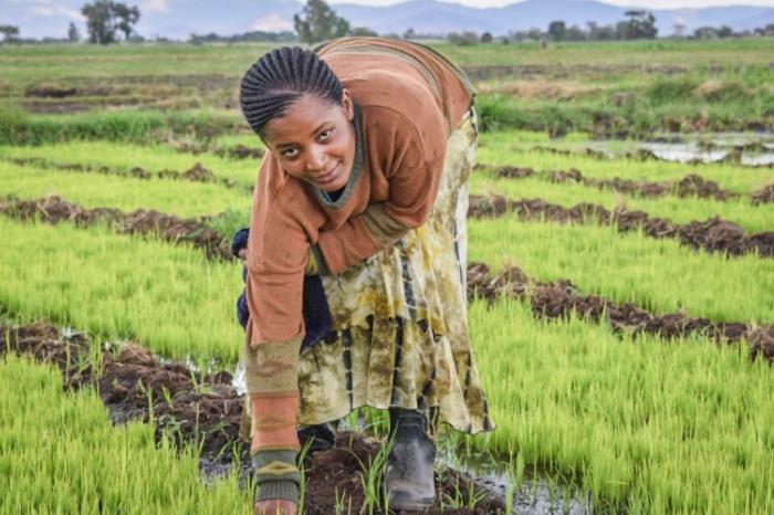 Duurzame rijstteelt geeft meisjes nieuwe toekomst