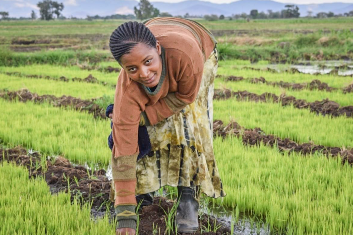 A different future for girls through sustainable rice growing